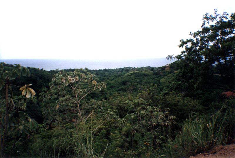 Roatan2000: View from The Road