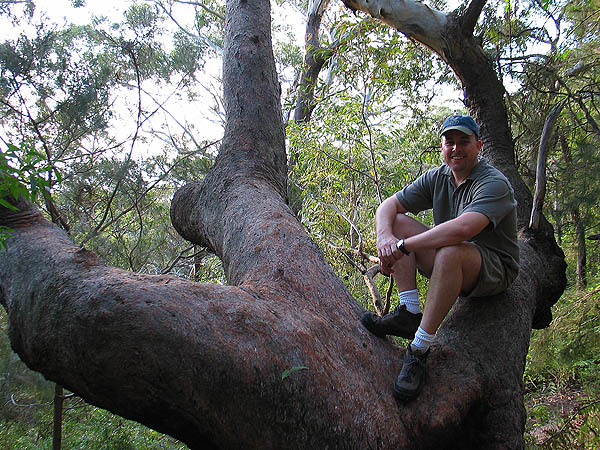 Australia 2004: Curtis in Tree