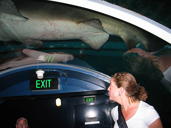 Australia 2004: Aquarium Sharks and Jane