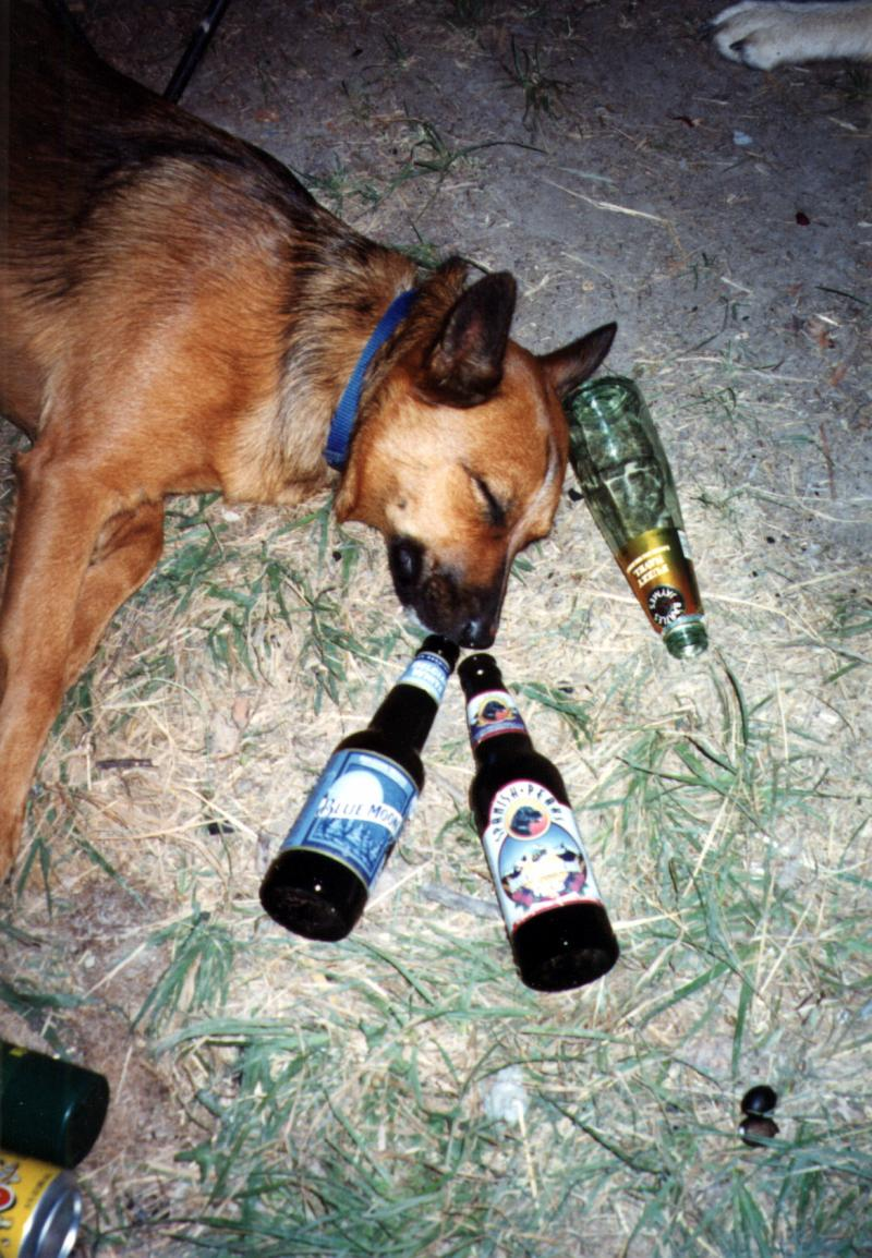 Drunk Doggy
