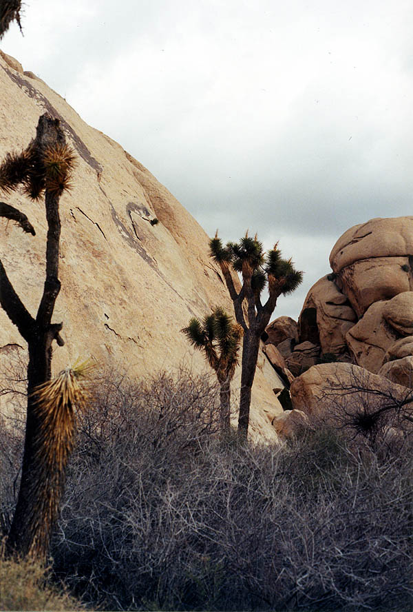 Joshua Tree 2001: Queen Valley 02