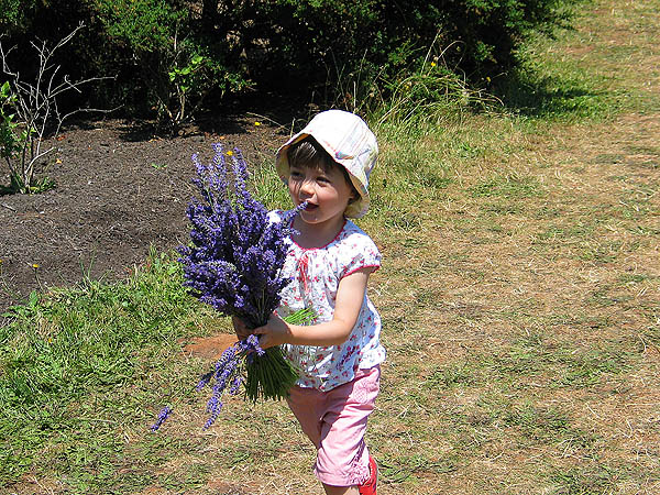 Lavender Festival 2004: Little Girl and Lavender